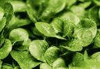 Quels sont les meilleurs légumes à planter dans son potager.